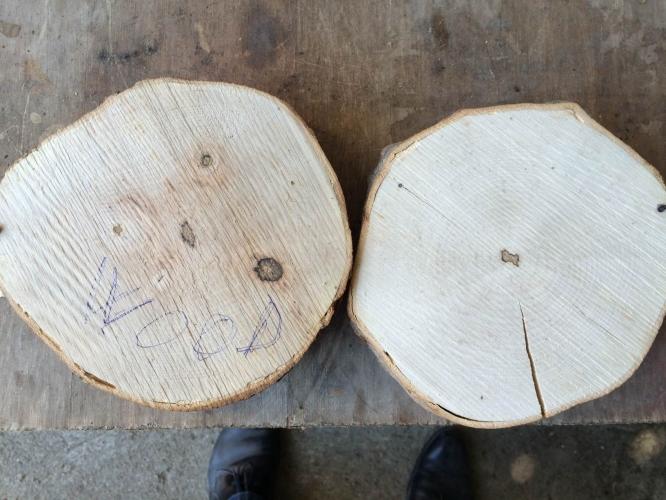Lemn tratat cu Bios Wood vs. produs netrarat