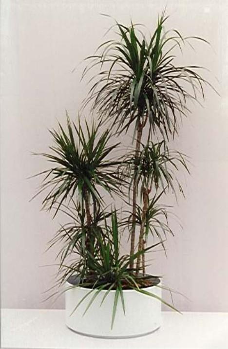 Plante de interior bucuresti construct for Plante de interior
